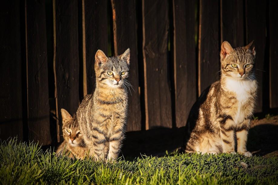 dwa-kotki
